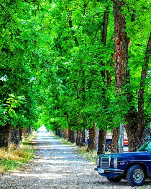 Follow ur own  road 🚗 livelovebekaa ........ naturepainting ... (Taanayel- Bekaa)